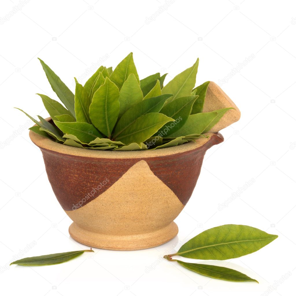 Bay Leaf Herb