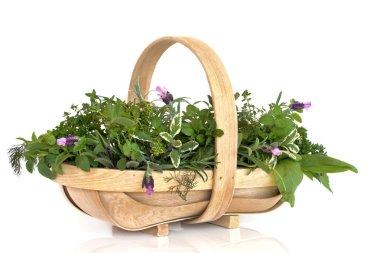 Basket of Fresh Herbs