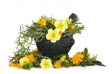 Herb and Flower Beauty