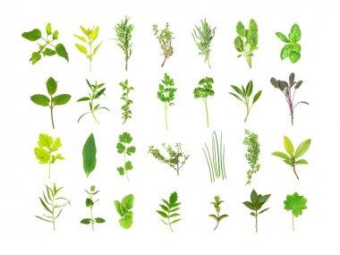 Large Herb Leaf Selection