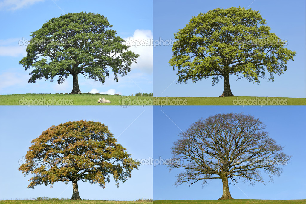 understanding the concept behind the 2 3 4 trees and its comparison to the avl trees Using the same approach as proving avl trees have o(logn) 6006 quiz 1 solutions name 4 (g) indicated a lack of fully understanding the question.