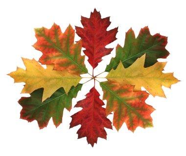Autumn leaves composition