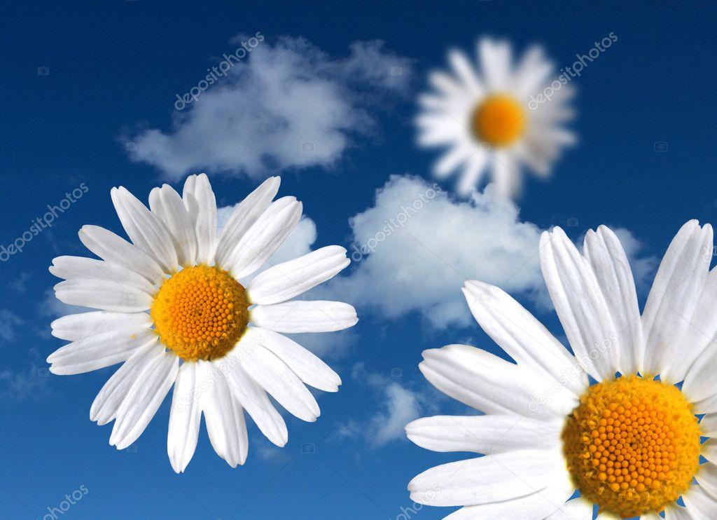 Flowers on heavenly sky