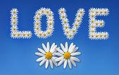 milují květiny