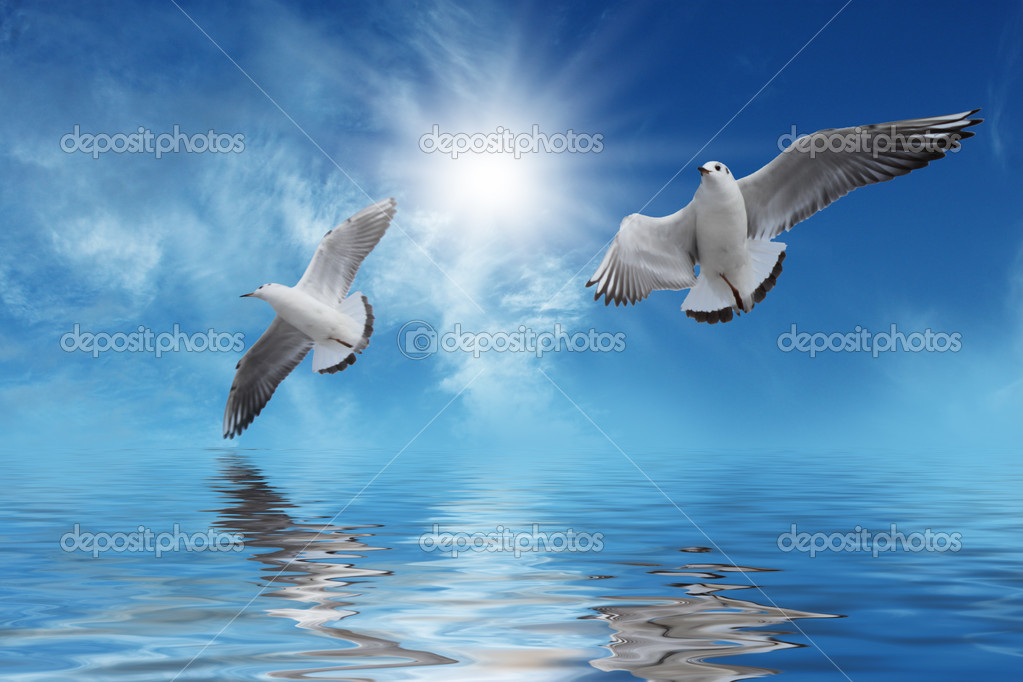 White birds Flying to Sun