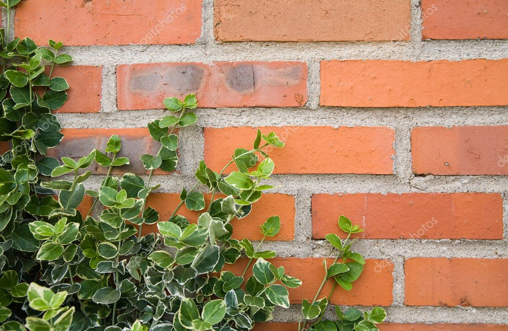 Ivy leaves on bricks background