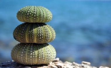 Three sea urchins