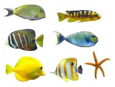 Tropical world of fish
