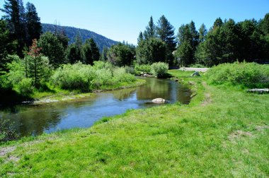 Sierra Stream And Meadow