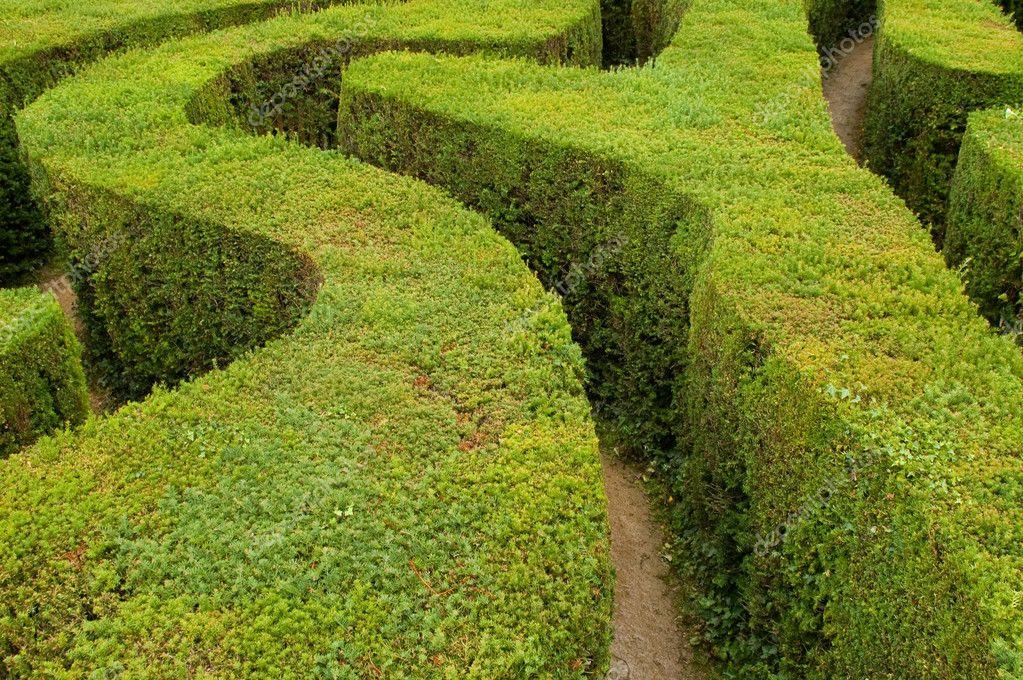 Maze hedges