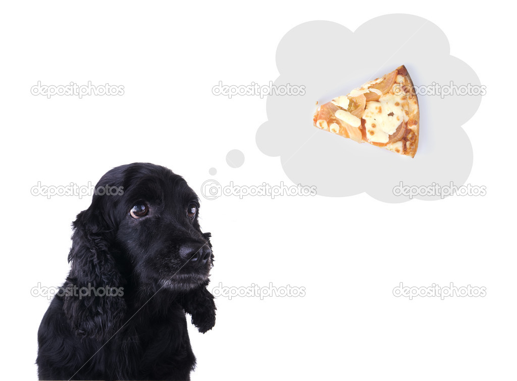 Cocker spaneil with thought cloud pizza, food can be easily removed for other purpose