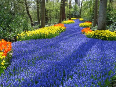 Lane of colorful spring flowers
