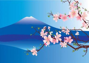 Japan fuji sakura