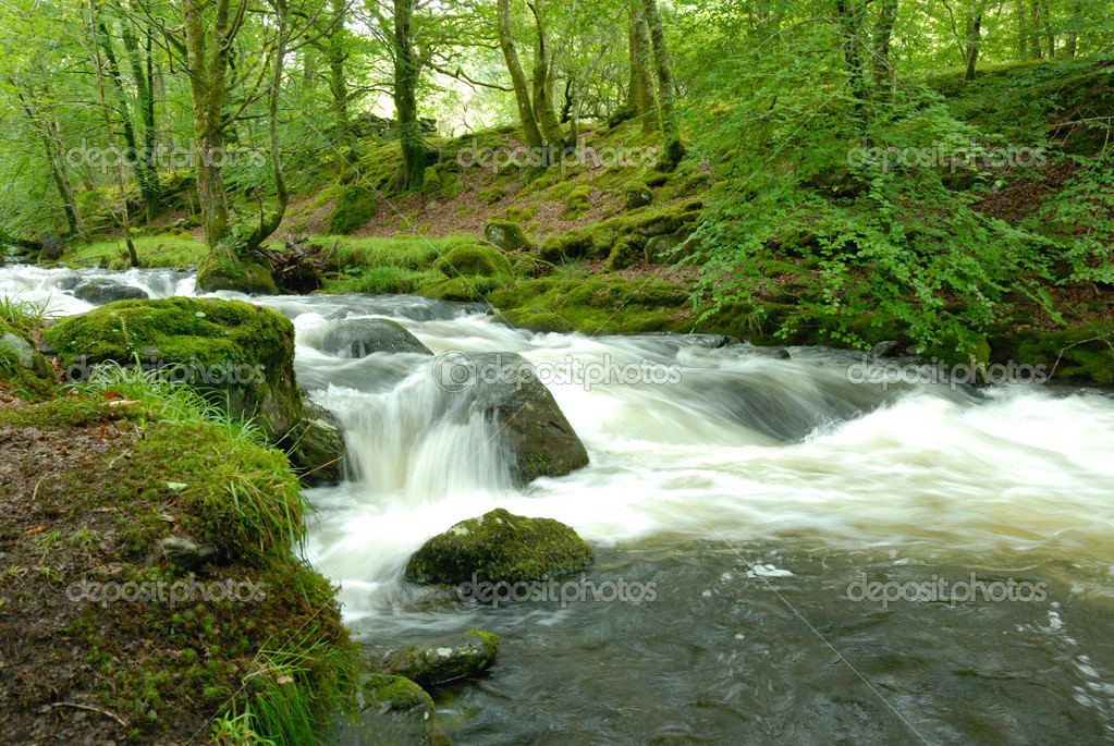 Fast flowing stream — Stock Photo © warren0909 #2086790