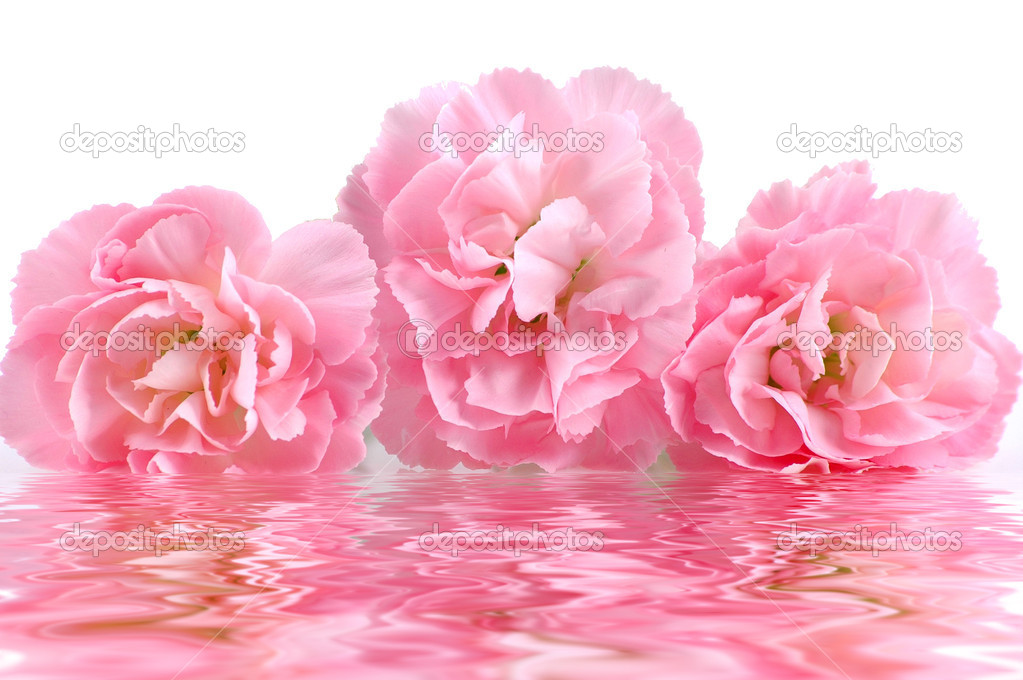 Pink flowers and reflection