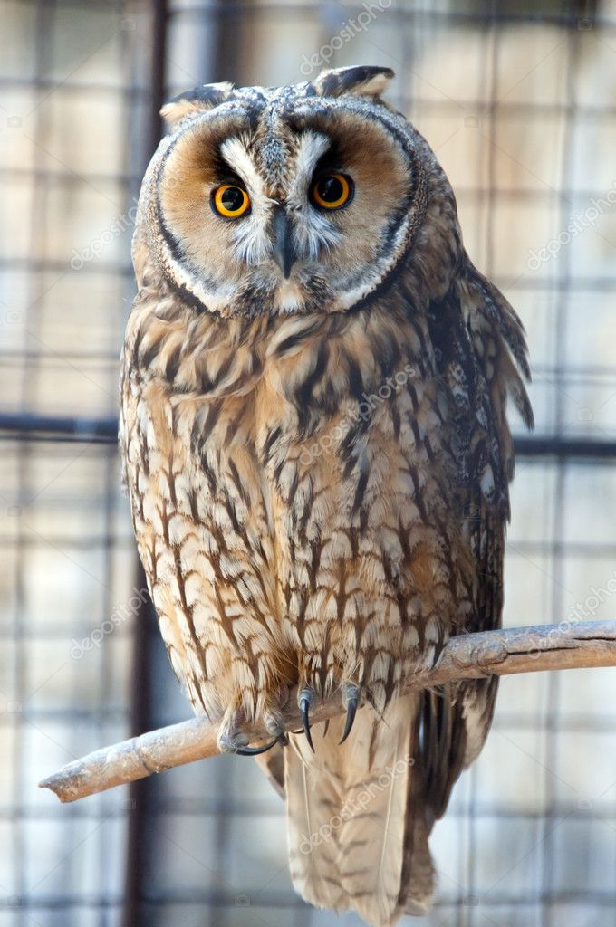 Owl in the zoo