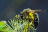 pracovní včela