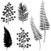 Fényképek A tervezők, növényi vektoros gyűjtemény