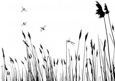 Real grass silhouette and dragonfly