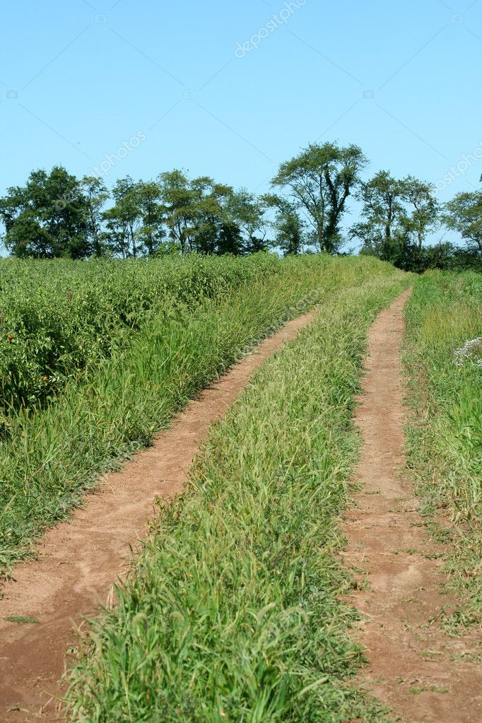 Dirt road through a farm field