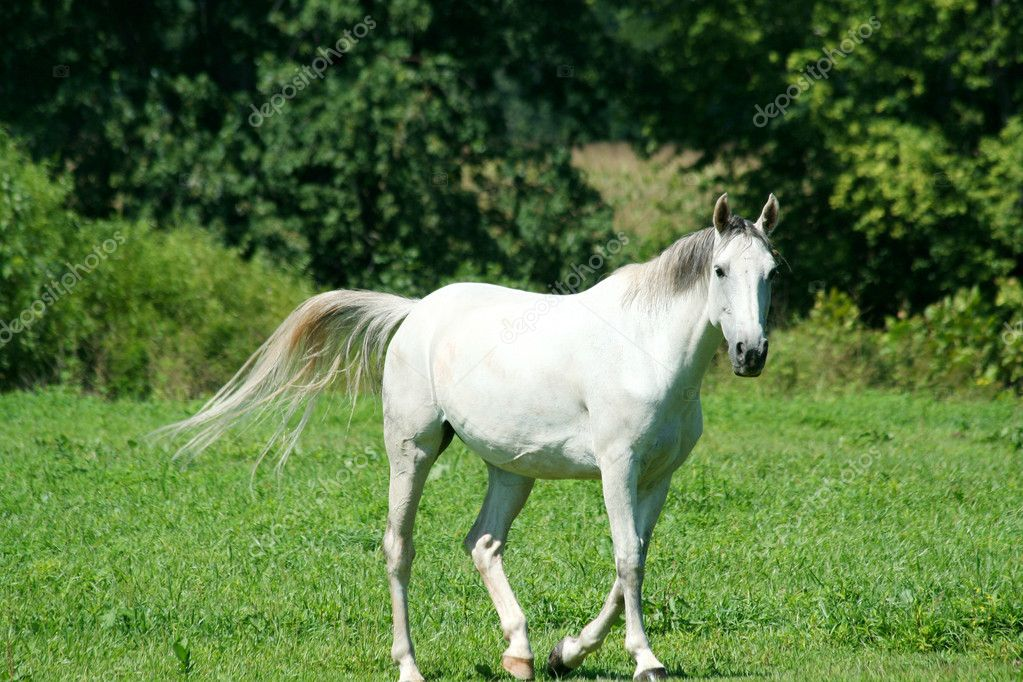 white horse running id - photo #10