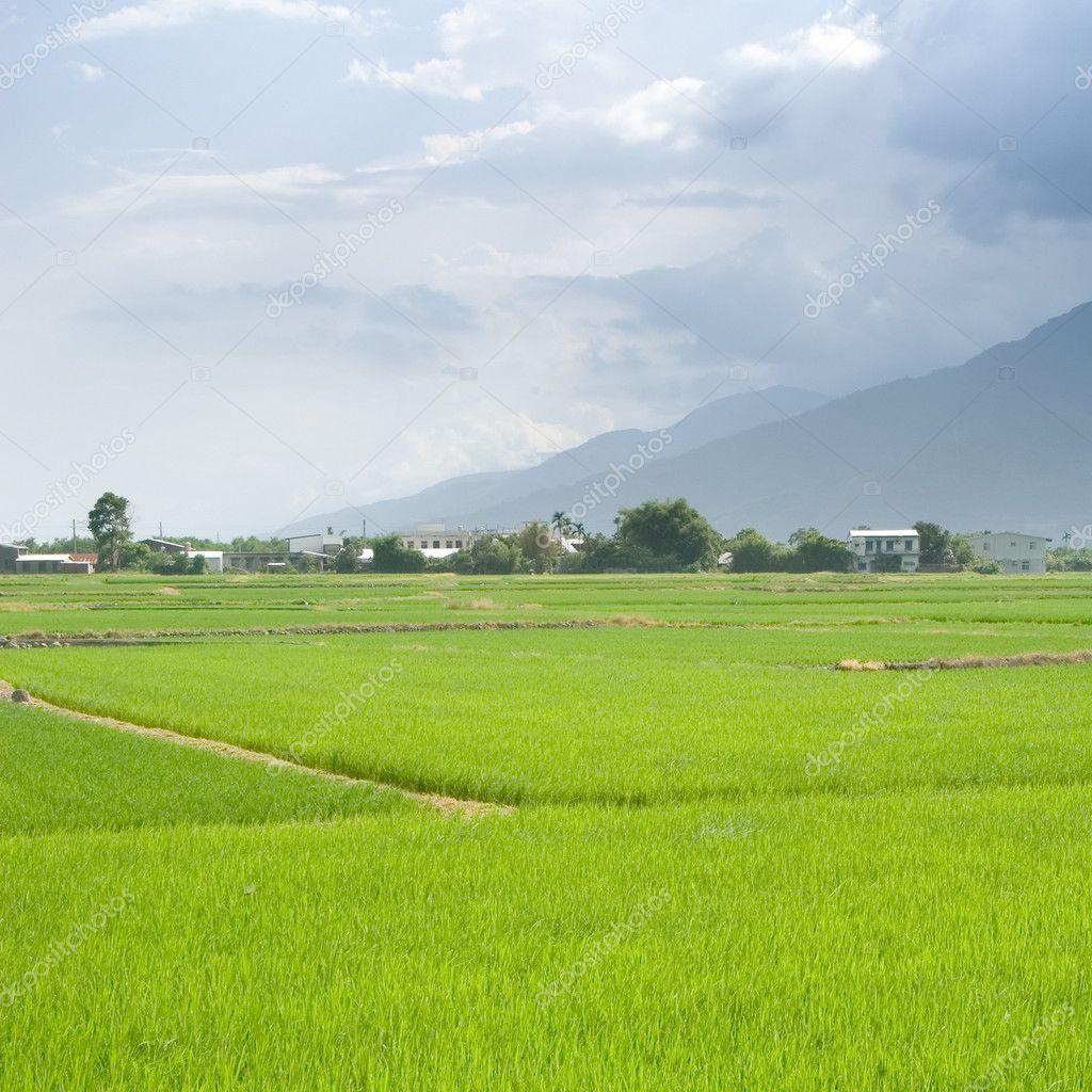 Landscape of beautiful green farm