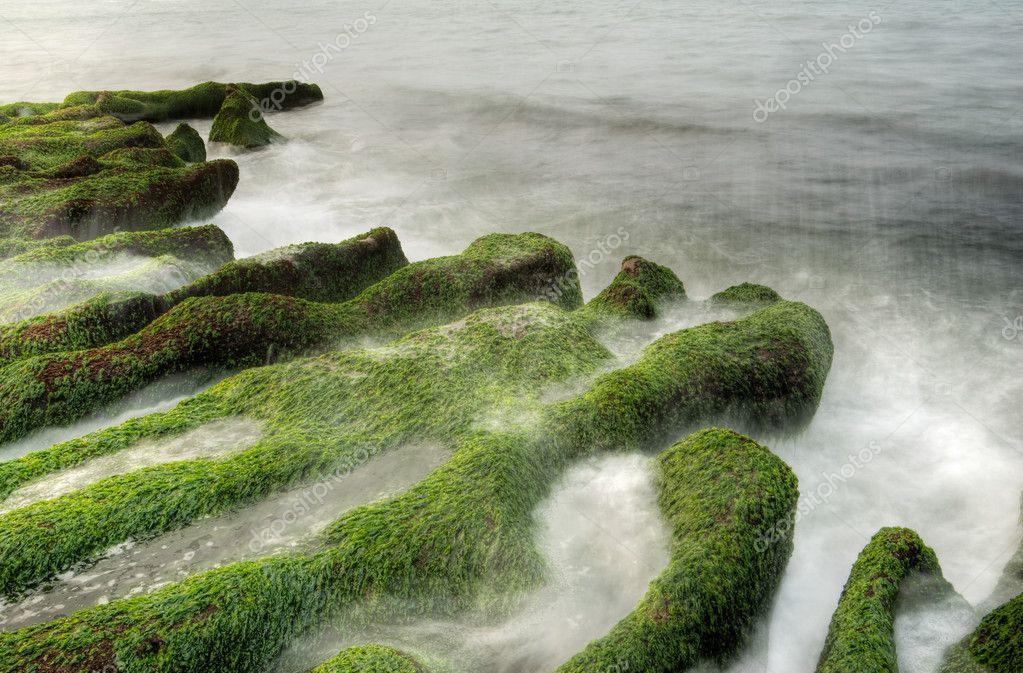Landscape of seaweed coast