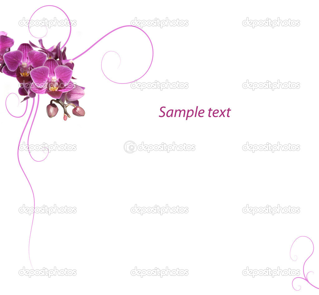 Purple orchid romantic background