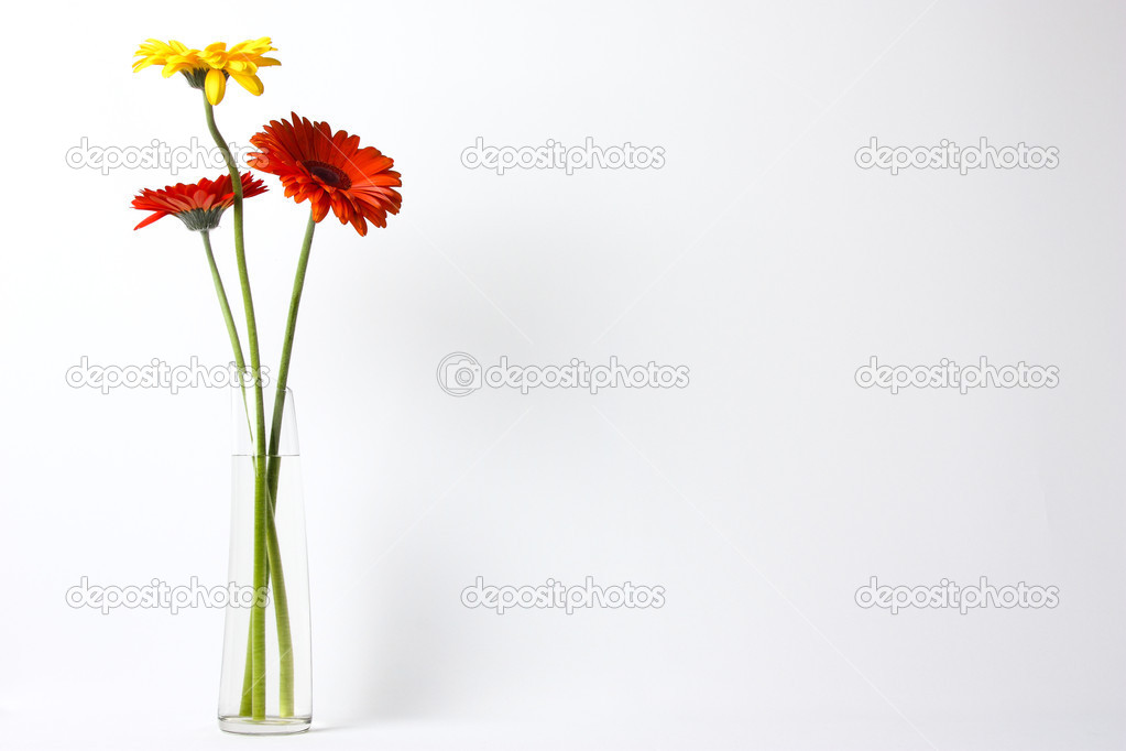 Three beautiful flowers in a glass vase