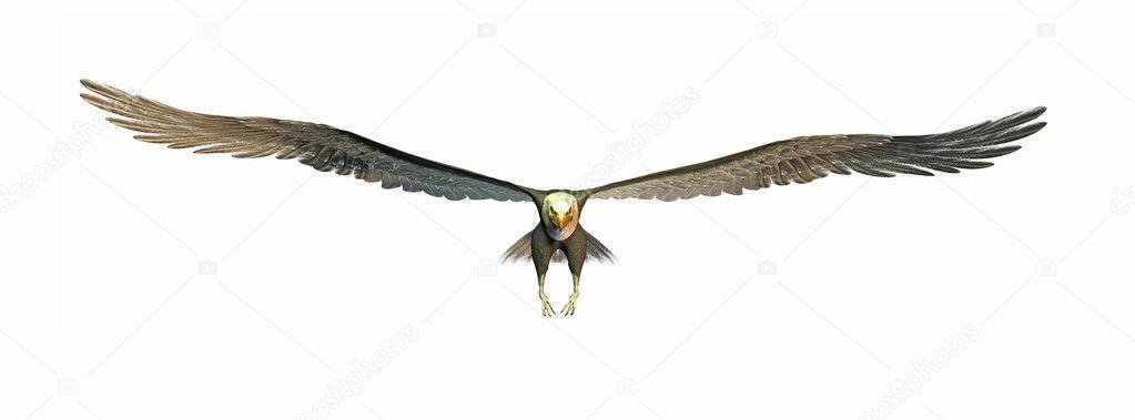 Flying eagle stock photo magann 2446941 a illustration of a big flying eagle photo by magann altavistaventures Images