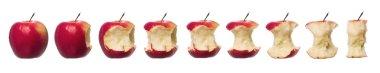 Red apples in progress towards white background stock vector