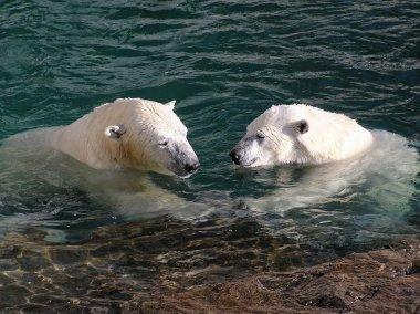 Polar bear in love holding hands