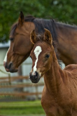 Mother horse and baby foal
