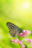 Fotografie motýla