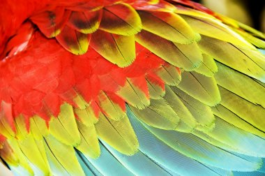 Colourful wings