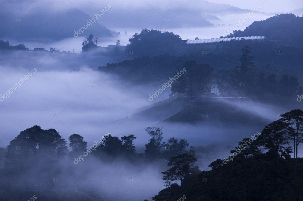 Morning fog at Tea Farm.