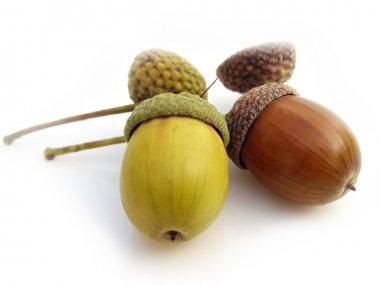 Fruit oak