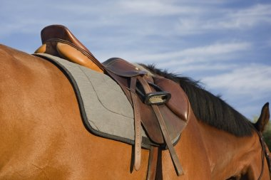 English style saddle on a bay horse
