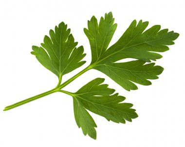 Parsley green leaf