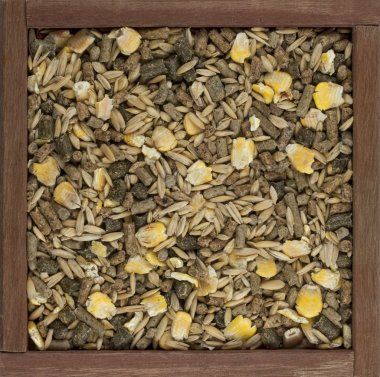 Horse feed with corn, barley, oats grain