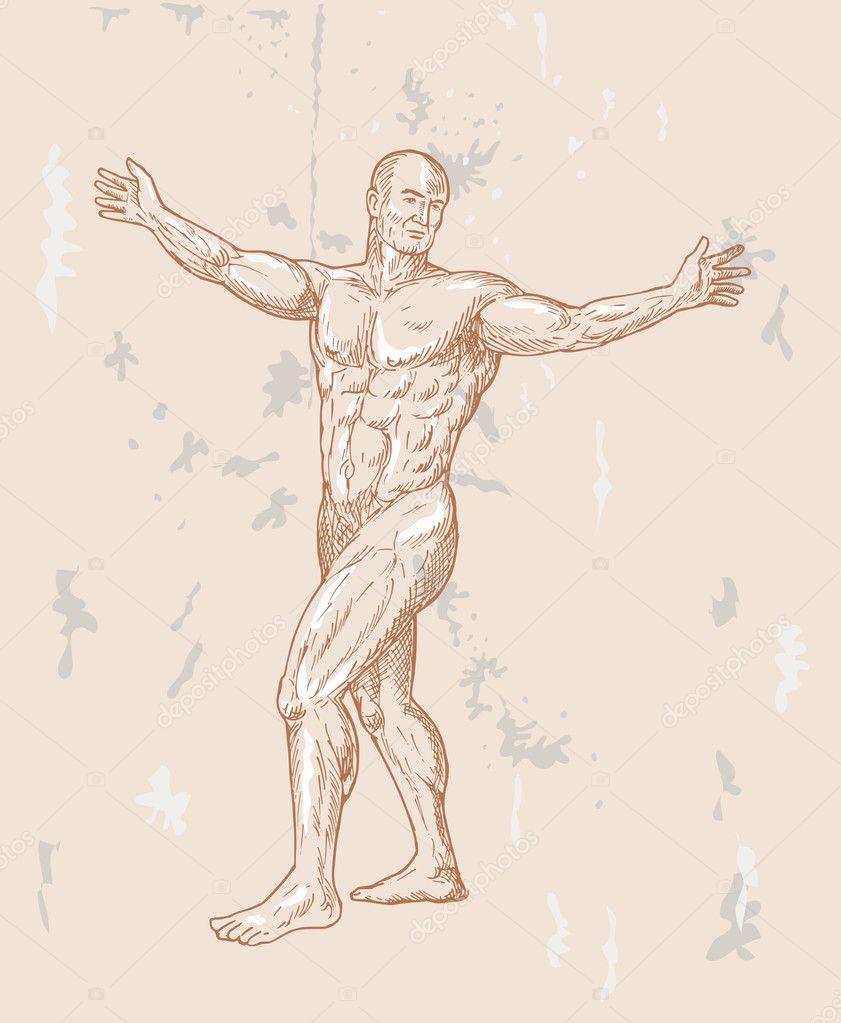 Male human anatomy — Stock Photo © patrimonio #2064782