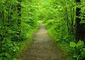 Fotografie pěší cesta v lese