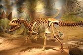 Fényképek dinoszaurusz