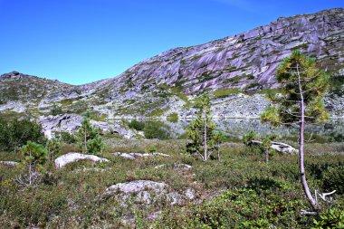 Fir trees against lake and Sayan ridge
