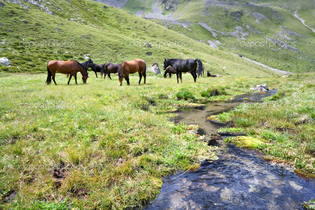 Horses at meadow near stream, Caucasus