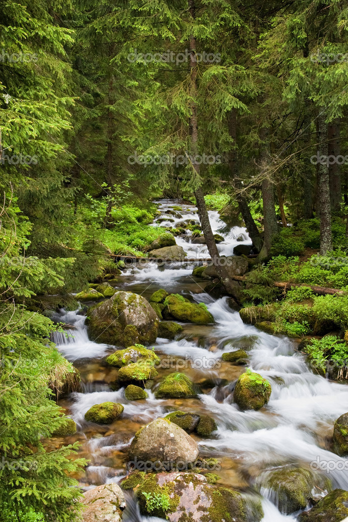 Фотообои Forest Stream in Tatra Mountains