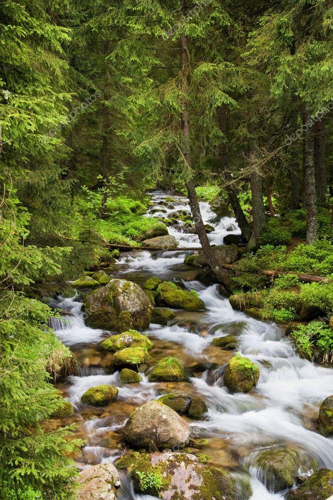 Фотообои Лесной ручей в горах Татры