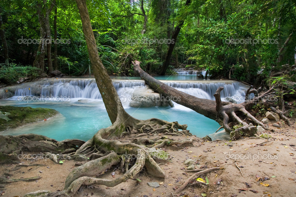 Фотообои Tropical Forest Scenery