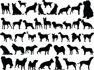 Big collection of dogs