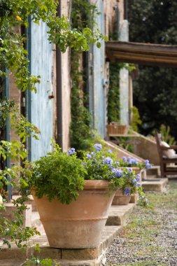 Terracotta plant pot outside a Tuscan farmhouse stock vector
